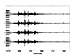 TXAR Columbia Infrasound Data